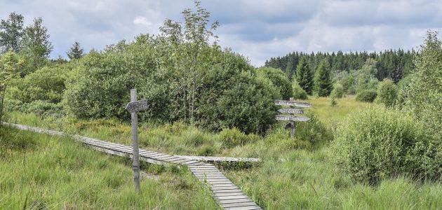 biber-bergstrasse_reflexion-in-der-natur